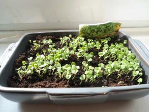 Keimpflanzen